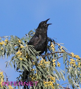 Back-Yard Birds, White Rock, NM