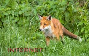 FOX-XXY-6
