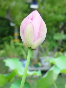 flowers-025_resize